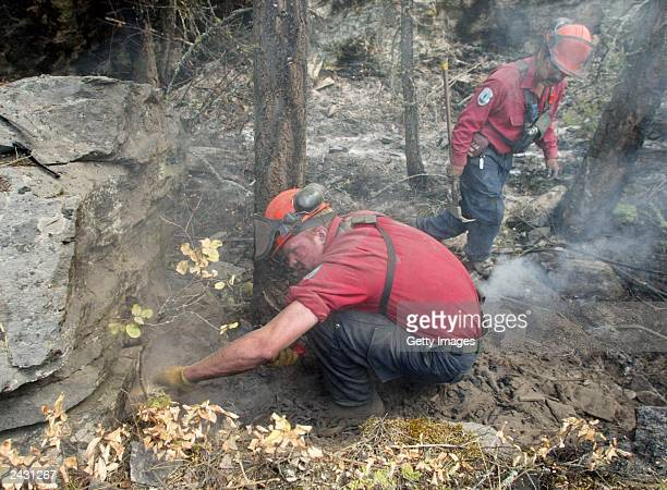 Firefighters dig out hots spots from a wildfire August 26 2003 that swept through the hills above Kelowna British Columbia Canada The Okanagan...