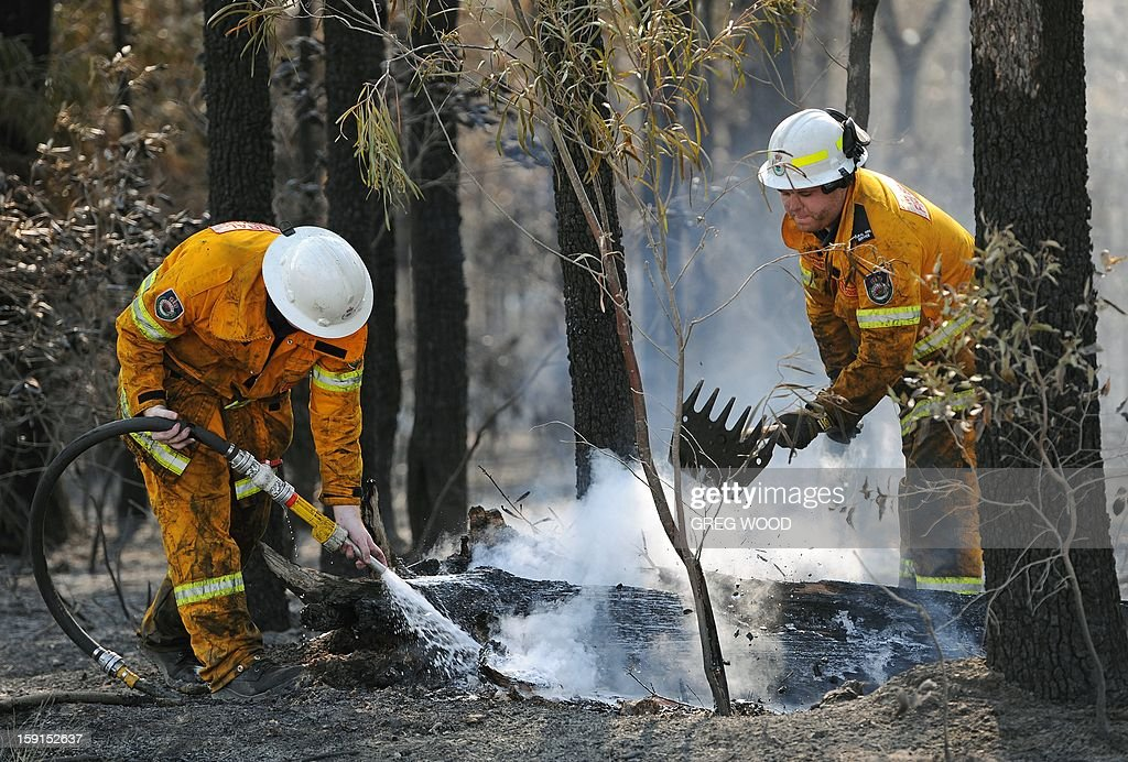 Firefighters douse burning logs from the Deans Gap fire near Nowra on the south coast of Australia's New South Wales state on January 9, 2013. Cooler conditions helped firefighters battling blazes across Australia on January 9 but up to 30 were still out of control. AFP PHOTO / Greg WOOD