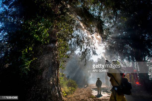 Firefighters douse flames in a tree at South Mountain Road during the Maria Fire in Santa Paula Ventura County California on November 01 2019