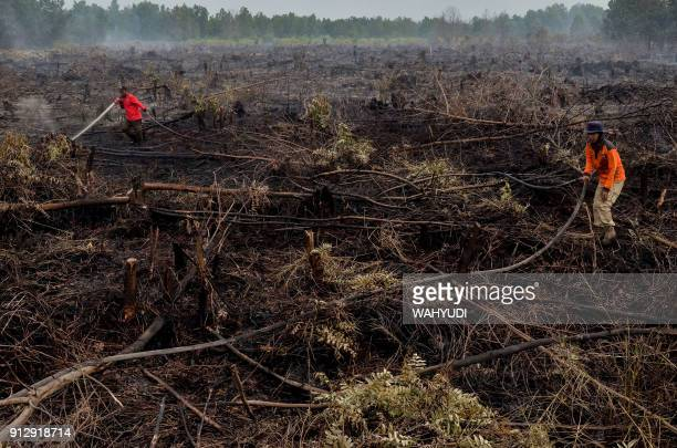 Firefighters exstinguish a peatland fire in Pekanbaru Riau province on February 1 one of 73 detected hotspots causing haze on the island of Sumatra...