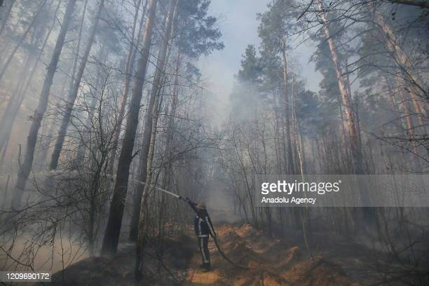 Firefighters extinguish a fire during a forest fire in Ragovka Ukraine on April 10 2020 Fire from the radioactive Chernobyl zone approaches the...