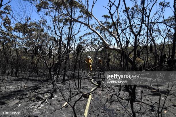 Firefighters proceed to dose bush fire at the Woodford residential area in Blue Mountains on November 12 2019 A state of emergency was declared on...