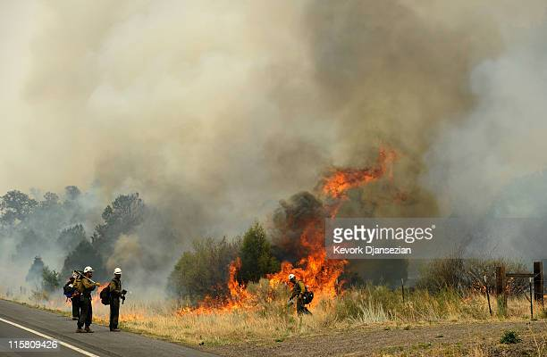 Firefighters set a backburn on Highway 191 in an attempt to control a raging wildfire on June 10 2011 in Nutrioso Arizona The fire which is five...