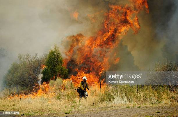 A firefighters set backburn fire on Highway 191 in an attmpt to control the out of control Wallow Fire on June 10 in Nutrioso Arizona The fire which...