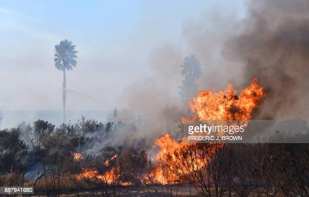 Firefighters spray down palm trees as fire rages beside the US 101 freeway at the beachside community of Faria Beach northwest of Ventura California...
