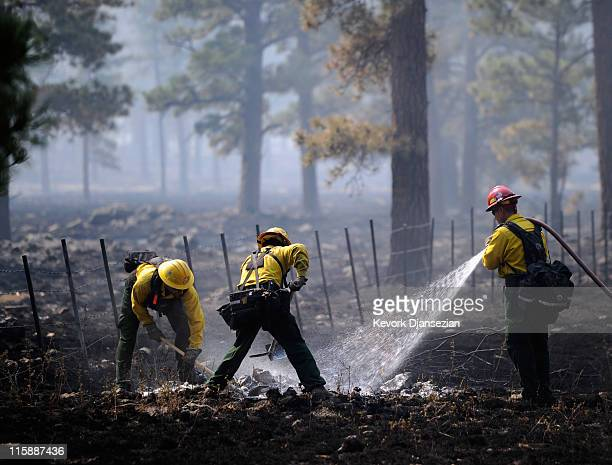 Firefighters Wes Odom Tarcy Wright and Cpt Jimmy Neisen from Surprise Arizona work to put out a hot spot in a tree trunk on June 11 2011 in Greer...