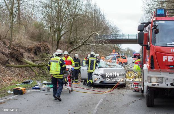 Firefighters work on a car after a tree fell on it heavily injuring the driver on January 18 2018 on a road near Moers western Germany Weather...