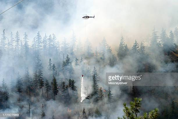 Firefighting a forest fire with white smoke