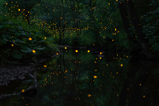Fireflies and river - gettyimageskorea