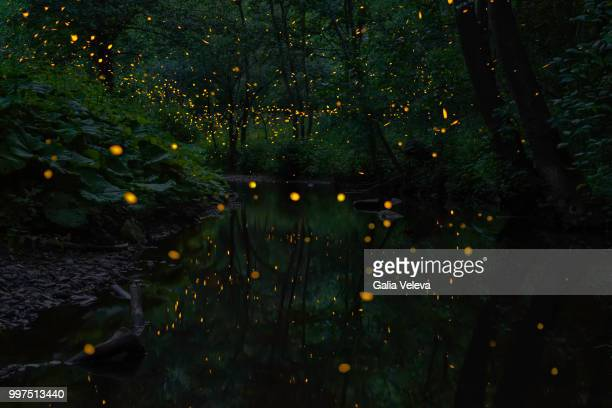 fireflies and river - fireflies stock pictures, royalty-free photos & images