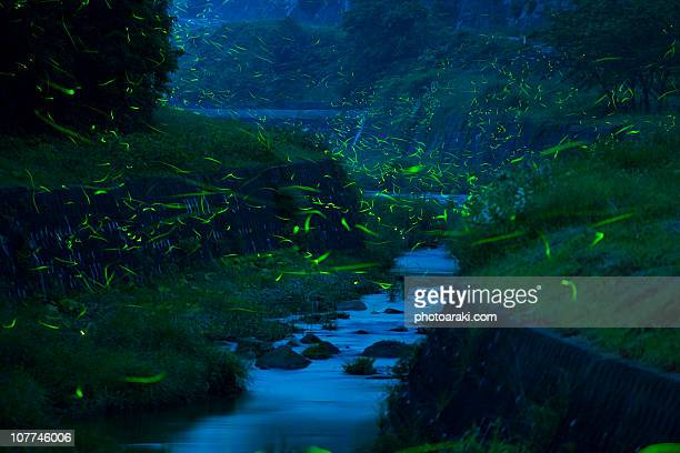 fireflies and rivers - fireflies stock pictures, royalty-free photos & images