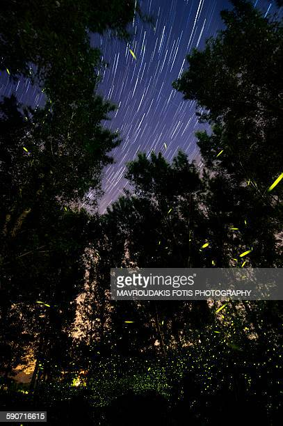Fireflies' dance