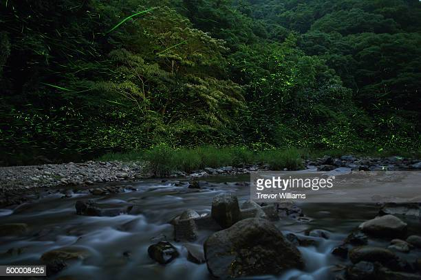 Fireflies glowing along a river in a forest