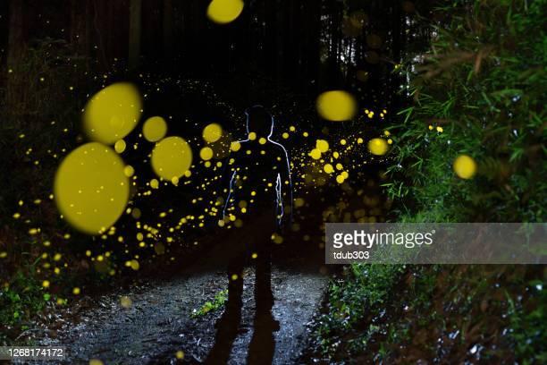夜の森の中で輝くホタル - 蛍 ストックフォトと画像