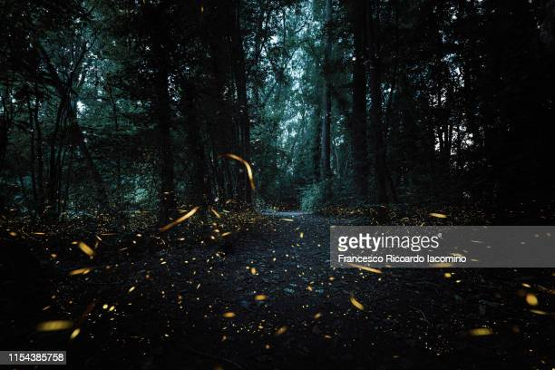fireflies in a forest, dark magical mood - glowworm stock pictures, royalty-free photos & images