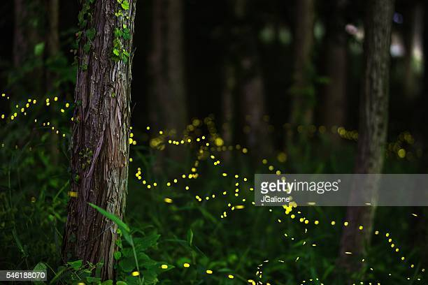 Fireflies in a moonlit forest