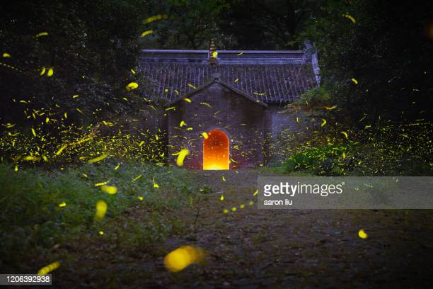 fireflies in a mysterious temple - グローワーム ストックフォトと画像