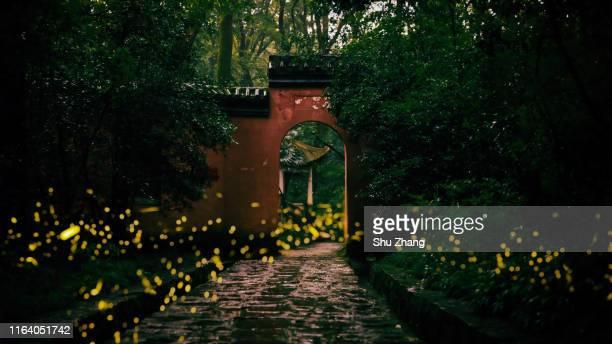 fireflies in an ancient temple - 江蘇省 ストックフォトと画像