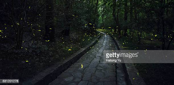 fireflies on a summer night in forests of mt. zijin, nanjing, jiangsu province, china - fireflies stock pictures, royalty-free photos & images