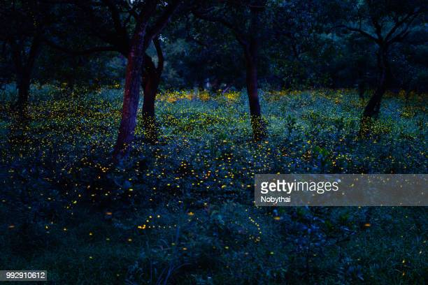 fireflies - glowworm stock pictures, royalty-free photos & images