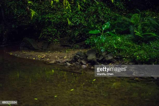 fireflies reflection near river - 蛍 ストックフォトと画像