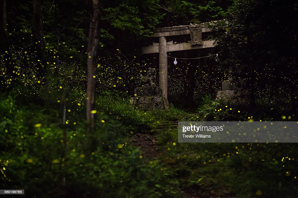 Fireflies surround a temple gate in the forest : Stock Photo