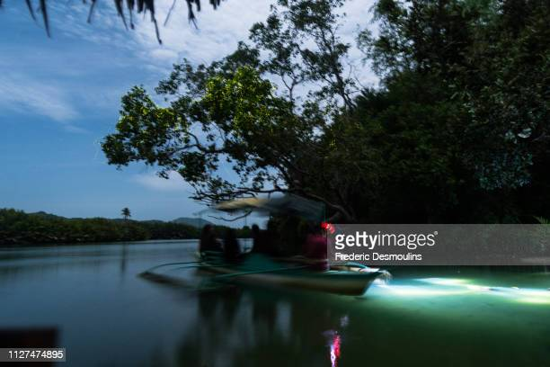firefly at loboc river - bioluminescence stock pictures, royalty-free photos & images
