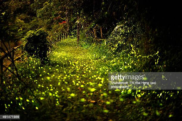 firefly carpet