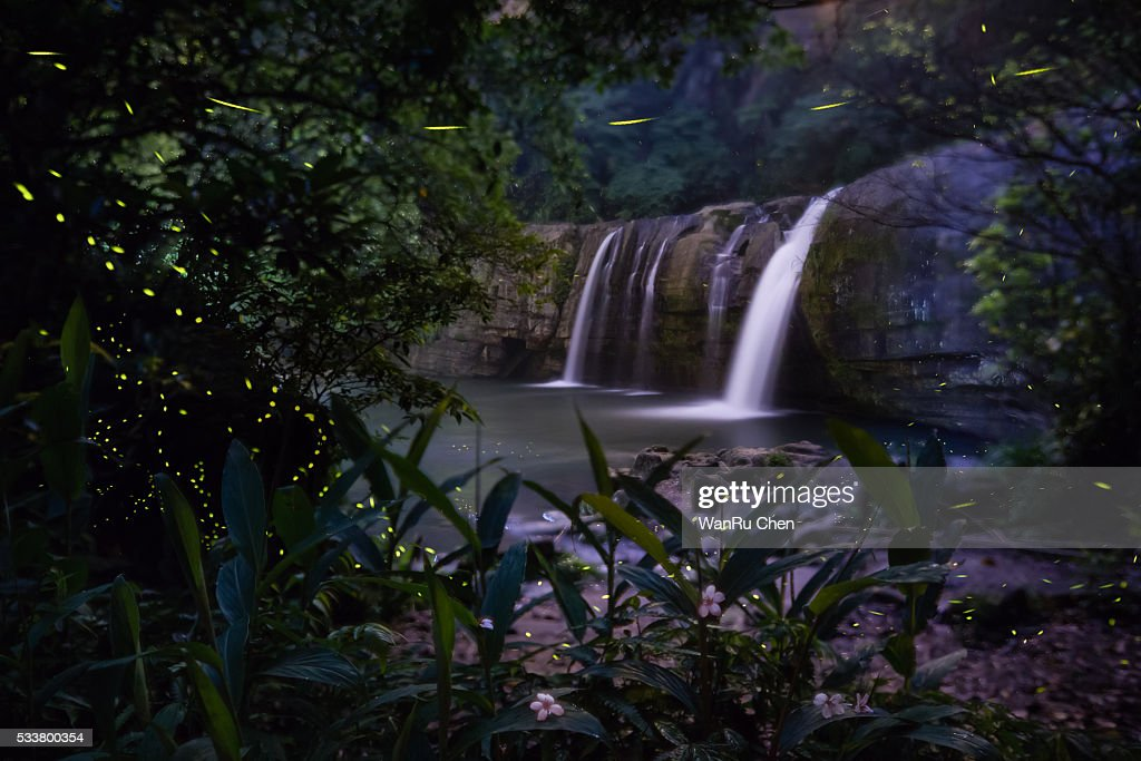 Firefly flying by the waterfall : Foto stock