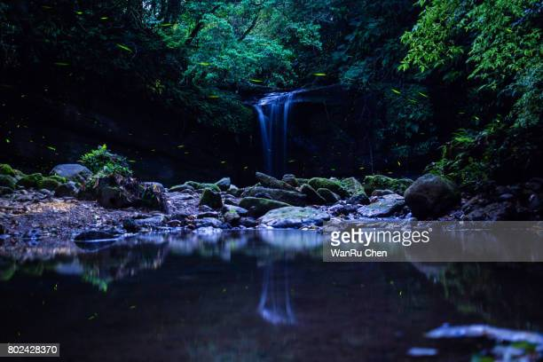 firefly flying by the waterfall - 蛍 ストックフォトと画像