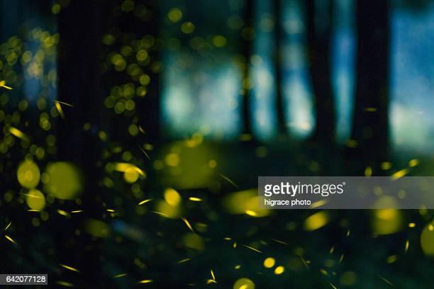 firefly light in summer night - 蛍 ストックフォトと画像