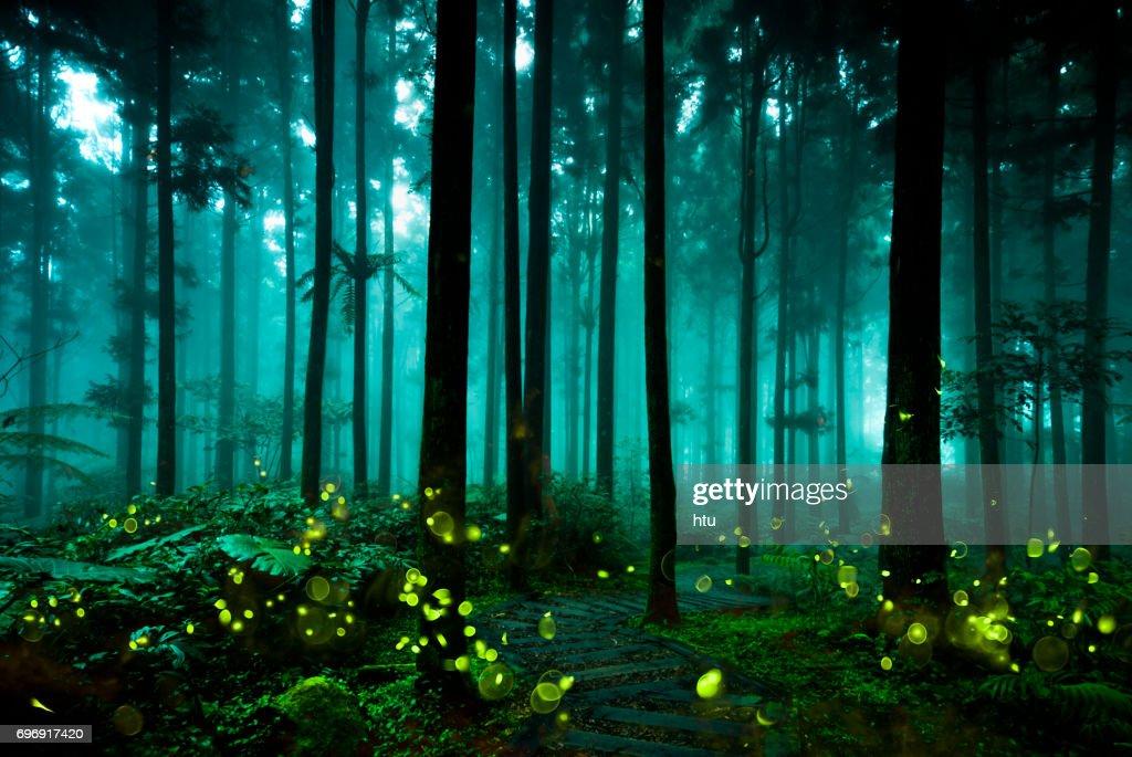 firefly : Stock Photo