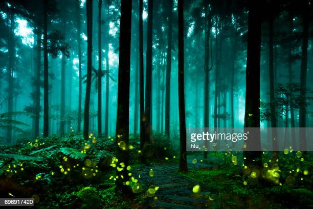 firefly - taiwan stock photos and pictures