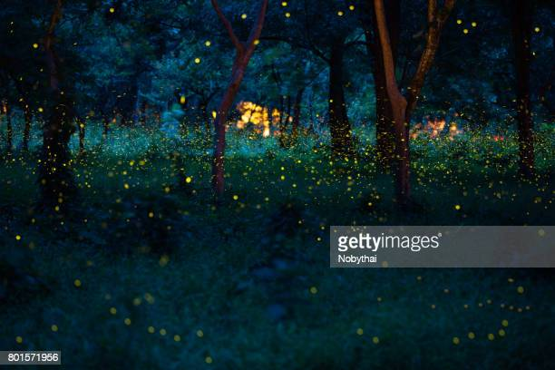 firefly - glowworm stock pictures, royalty-free photos & images