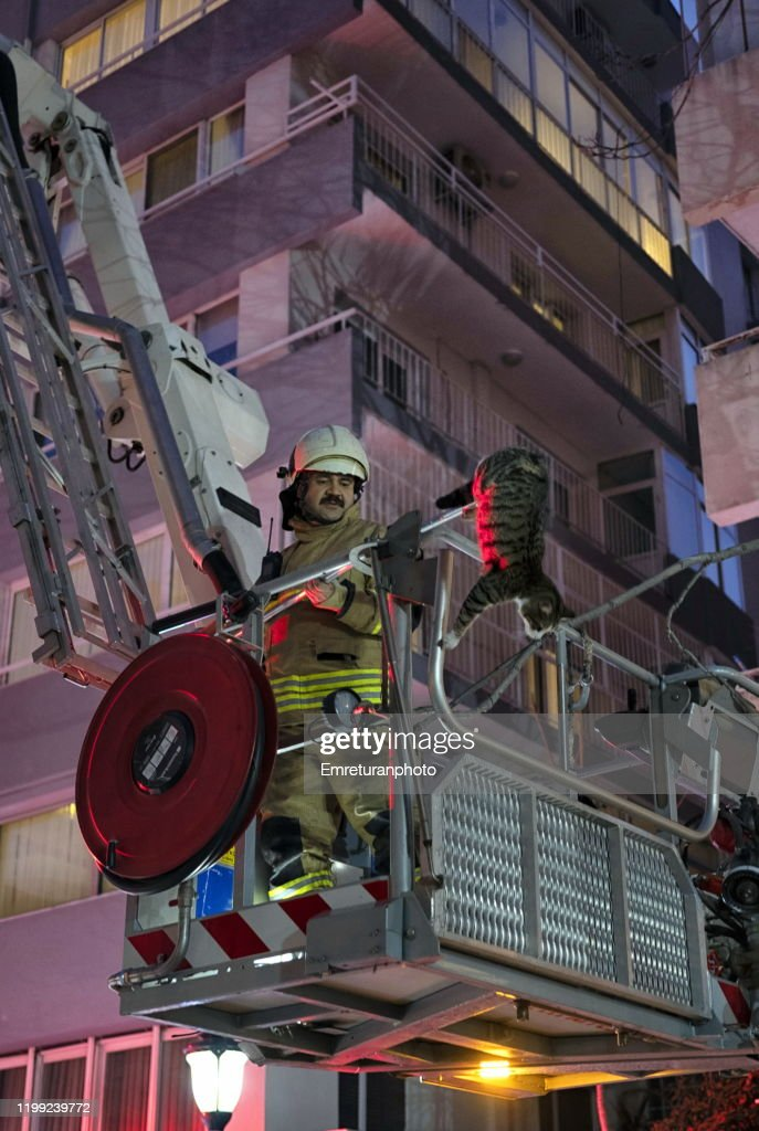 Fireman on ladder rescueing a domestic cat in the city,Izmir. : Stock Photo