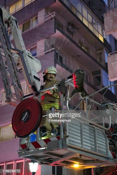 fireman on ladder rescueing a domestic cat in the city,izmir. - emreturanphoto stock pictures, royalty-free photos & images