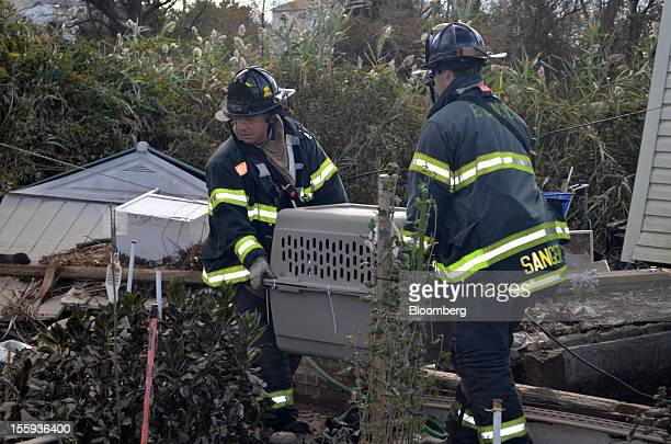 Firemen carry a large dog an 80 pound shepherdchow mix to safety on Staten Island in New York US on Saturday Nov 3 2012 The firemen were unable to...