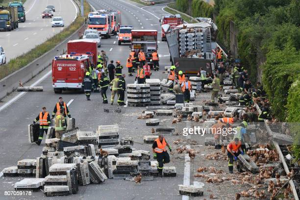 TOPSHOT Firemen remove chicken and transport boxes from the A1 highway in Asten near Linz upper Austria where a poultry truck caused traffic chaos...