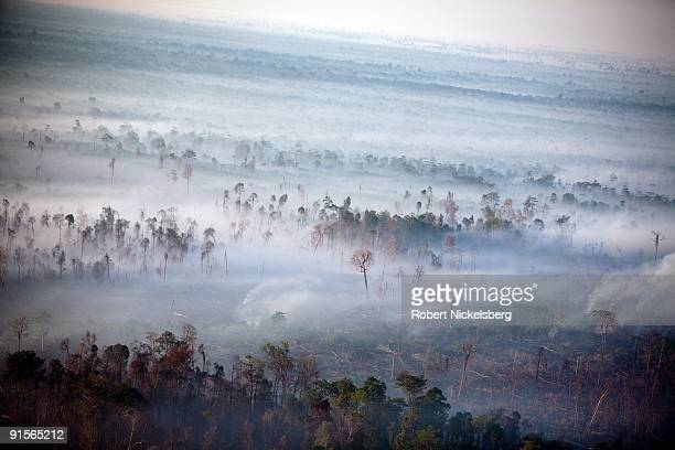 Fires burn off logged virgin rainforest spewing clouds of white smoke across peat swamp tracts cleared to plant oil palm trees June 11 2009 in Tripa...