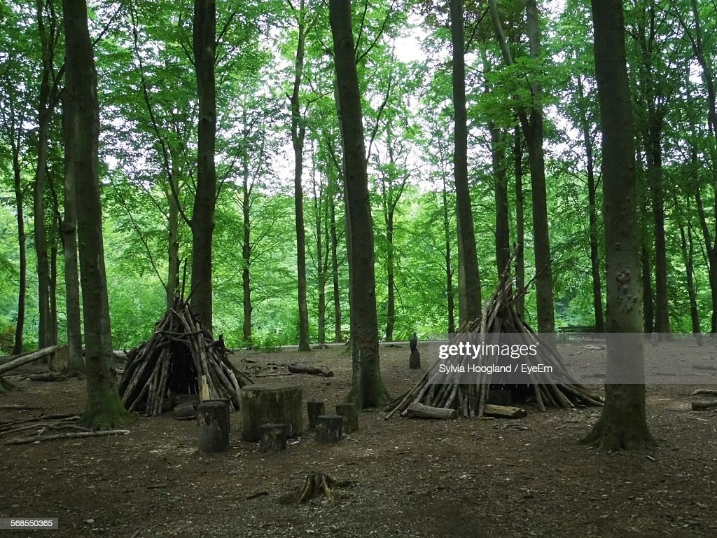 Firewood Amidst Trees In Forest : Stock Photo
