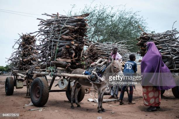 Firewood are piled up on a donkey-pulled carts to be sold at the Dadaab refugee complex, northeastern Kenya, on April 18, 2018. - Dadaab is one of...