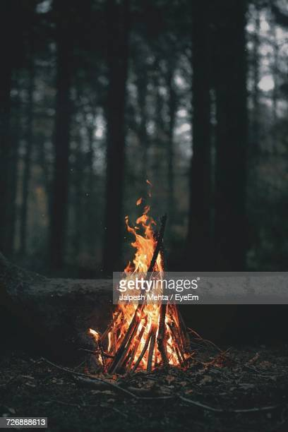 Firewood Burning In Forest At Dusk