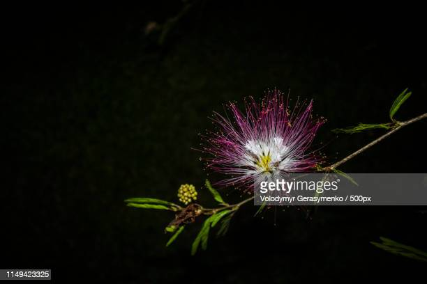 fireworks - south sudan stock pictures, royalty-free photos & images
