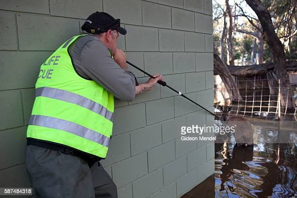 Firing a tranquilizer dart using a blow pipe Yarriambiack Creek flows through Warracknabeal alongside where the local Lions Club has set up a small...