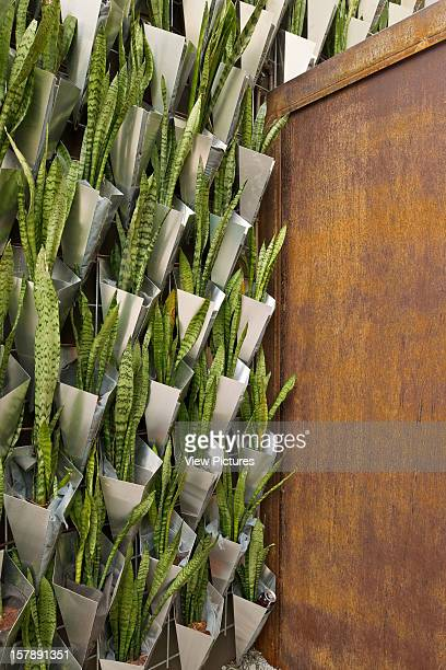 Firma Casa, Jardim Paulistano, Sao Paulo, Brazil, Campana Bothers & Super Limao, Detail Showing Sansevieria Trifasciata Filled Metal Vases And Steel...
