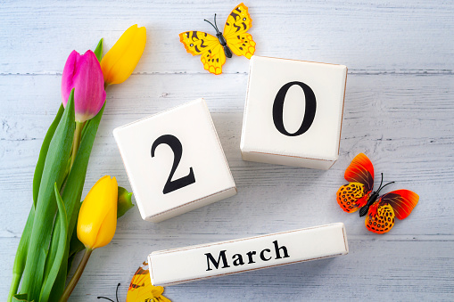First day of Spring and springtime equinox concept theme with block calendar set on March 20, two yellow tulips and one pink tulip and butterflies isolated on a rustic white wooden background 1130618362