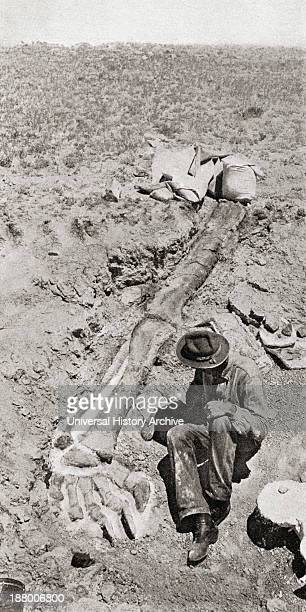 First Discovery Of The Long Hind Leg Of The Dinosaur Diplodocus By Henry Fairfield Osborn In 1898 At Bone Cabin QuarryNear Medecine Bow Wyoming...