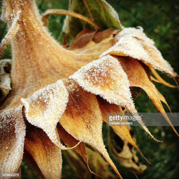 """first frost - """"danielle donders"""" stock pictures, royalty-free photos & images"""