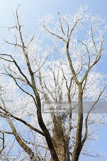 Un compus anticancerigen, descoperit în frunzele de salcie [studiu]
