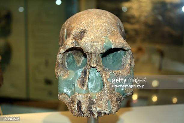 First humans Some scientists think this is the earliest evidence of humans It is about 19 million years old and belongs to the species Homo...